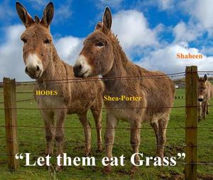 Let them eat grass